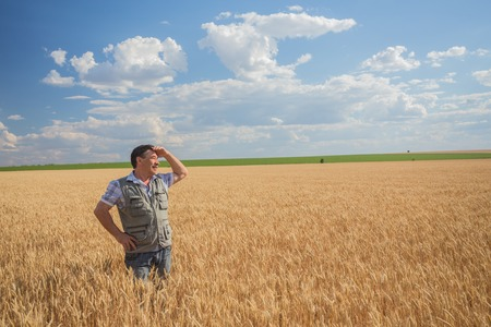 Happy smiling caucasian  old farmer standing in wheat fields Stock Photo - 25894450