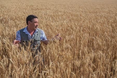 Happy smiling caucasian  old farmer standing in wheat fields photo