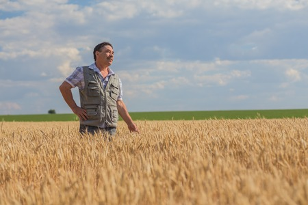 Happy smiling caucasian  old farmer standing in wheat fields 版權商用圖片