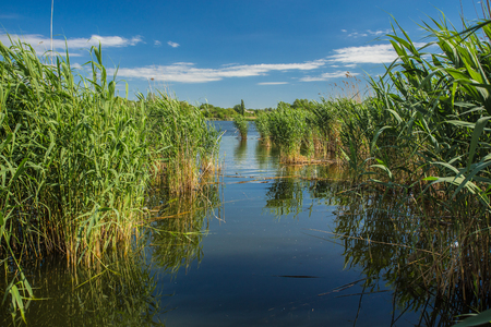 summer landscape with river and blue sky photo