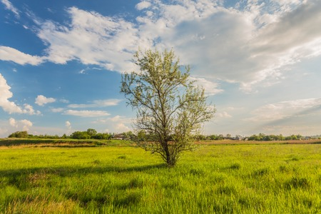 Meadow with green grass and blue sky with clouds photo