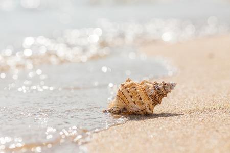 Shell on a sandy beach. summer photo