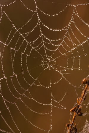 Spider web on a meadow at sunrise
