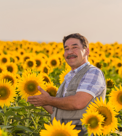 Farmer looking at sunflower photo