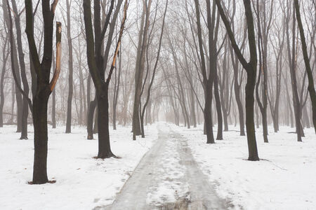 Winter park covered with white snow photo