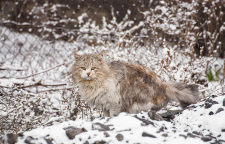Cat sitting on snow and looks. photo
