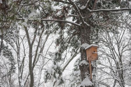 Nesting box under snow photo