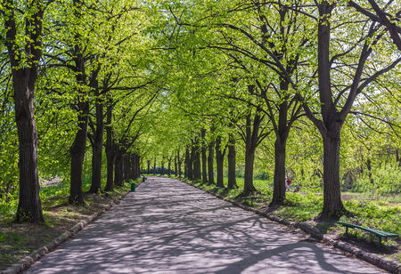 Green alley with trees in the park photo
