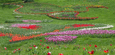 Flower bed of multicolor tulips at spring Stock fotó