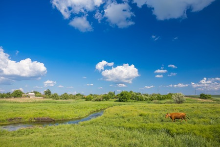 green grass, river, clouds in blue sky and cows Stock Photo