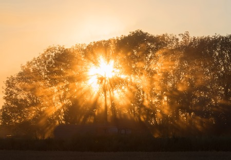 sunshine: Beams of morning sun filtering through the tree and fog.