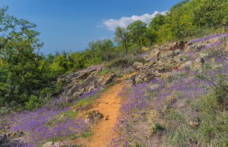 plateau of flowers: Flowers on a green plateau above the gulf in coast of Black sea.