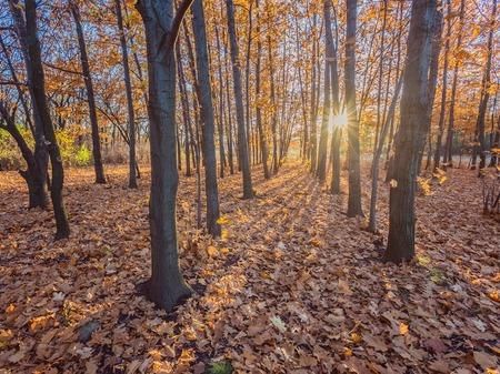 roble arbol: Caer. Otoñal Park. Árboles del otoño y hojas Foto de archivo