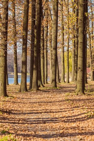 walking path: romantic walking path in the lake side in autumn