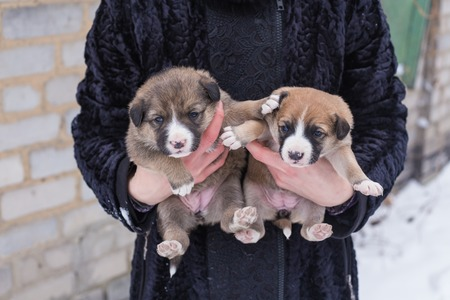 orphan: puppy in her arms, puppy orphan, black dog Stock Photo