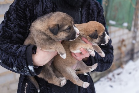 her: puppy in her arms, puppy orphan, black dog Stock Photo