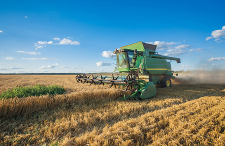 cropping: Harvesting combine in the field cropping cereal field