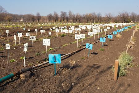 black soil: new beginning  spring sprouts in black soil