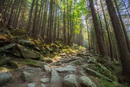 muir: Hiking trails through giant redwoods in Muir forest near San Francisco California