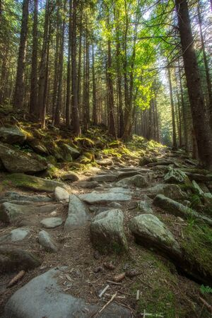 sequoia: Hiking trails through giant redwoods in Muir forest near San Francisco California