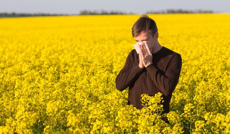 hayfever: Young man in yellow canola field blowing his nose and suffering from pollen allergy.