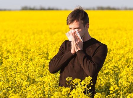 alergenos: Hombre joven en el campo de canola amarillo que sopla su nariz y que sufren de alergia al polen.