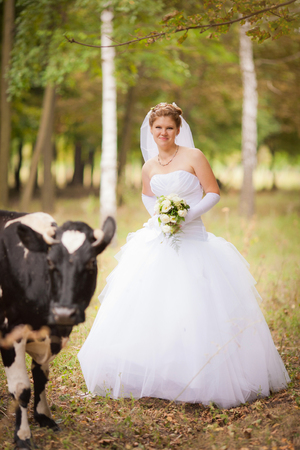 couple bride and groom at wedding in autumn are in yellow field at sunset behind the cows graze
