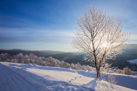 snowy field: Winter landscape with lots of snow and trees covered with snow