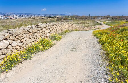 blooming road, nature in Kato Paphos Archaeological Park, Cyprus