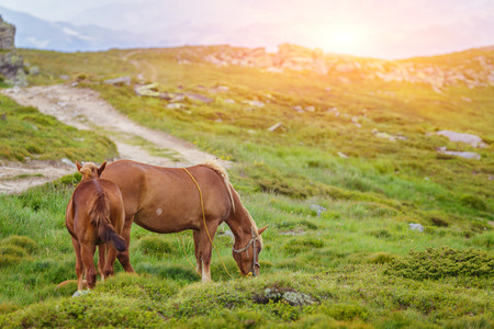 Horses in the green foothills of the Drakensberg mountains, South Africa Stock Photo