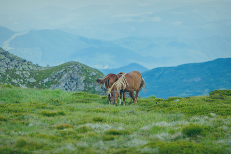 Horses in a meadow. Family with little foal Stock Photo