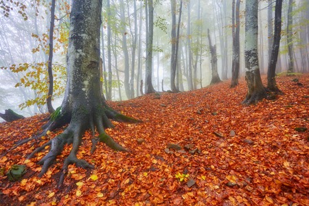 Forest trail in the mountains on a misty autumn day. Stock Photo
