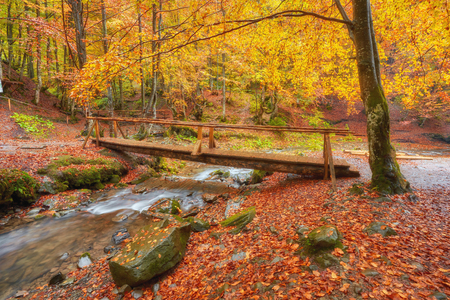 Autumn landscape - wooden bridge in the autumn park among the yellowed trees and fallen leaves