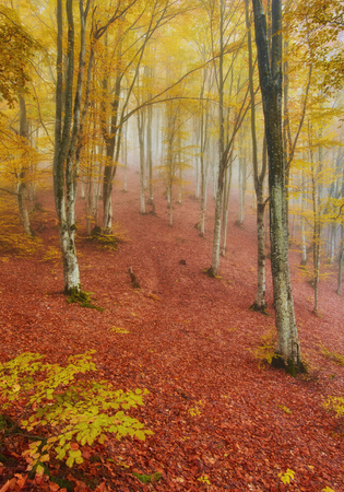 Autumn landscape in foggy wood with a track Imagens