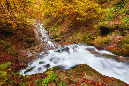 beautiful waterfall in forest, juicy autumn landscape