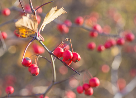 autumn berries on a background of blue sky