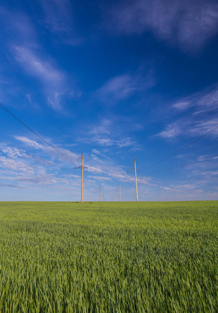 Powerline on a wide green field. Environment care. Stock Photo