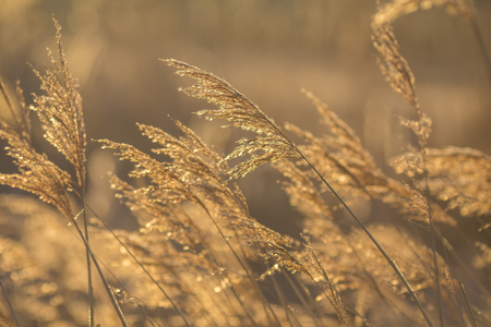 Bright natural background with a reed at sunrise