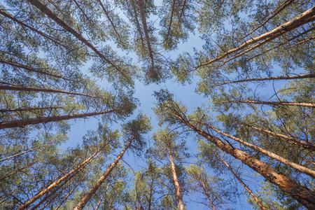 Fondo verde del bosque en un día soleado Foto de archivo - 85083959