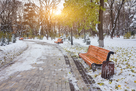 Winter landscape with benches in the alley of city park