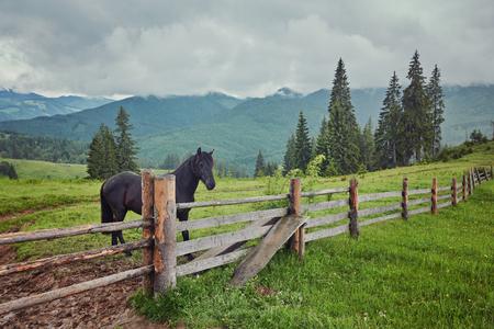 Beautiful horse on a summer mountain pasture Stock Photo