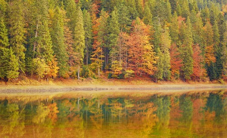Forest of colorful autumn trees reflecting in calm lake