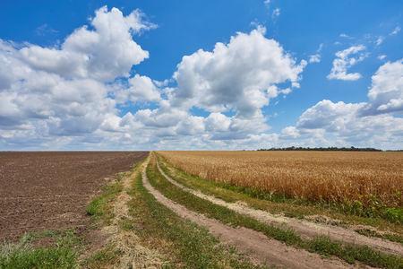 Leere Landstraße durch Felder mit Weizen