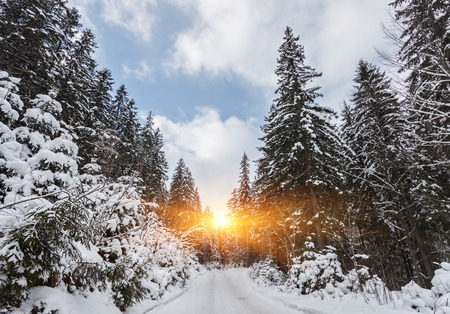 Winter landscape with the road the forest