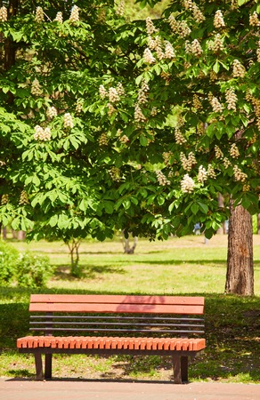 Bench in the park, under the chestnut trees