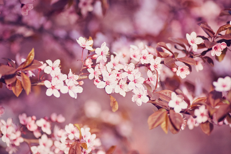 Spring border or background art with pink blossom. Beautiful nature scene with blooming tree and sun flare. Easter Sunny day.
