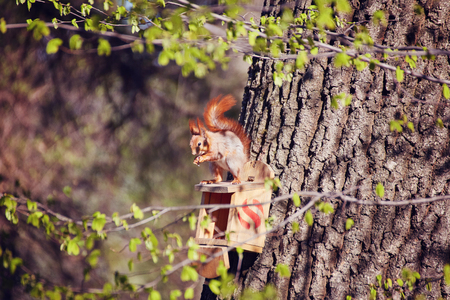 squirrel sits on a tree in the manger and eats nuts
