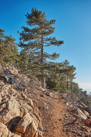 Atalanti national path.The trail goes around Chionistra mountain at an altitude of 1,700 -1,750 metres, passing through dense areas of black pine trees and Foetid Juniper. Stock Photo