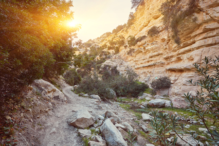 Avakas Gorge in Cyprus. Little river in foreground, sunlit rocks are in background.