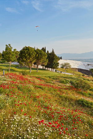 Closeup bright red poppies with blurry poppies in the background at Hierapolis in Turkey, Summer and spring concept Banque d'images - 103996260